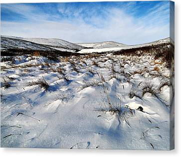 Canvas Print featuring the photograph Windswept by Blair Wainman