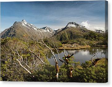 Canvas Print featuring the photograph Windswept Branches On Key Summit by Gary Eason