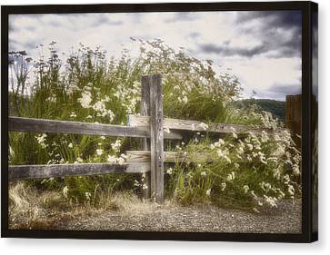 Windswept Canvas Print - Windswept by Joan Carroll