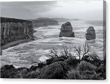 Windswept Canvas Print by Nicholas Blackwell