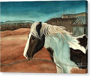 Windswept - Paint Horse - Shawangunk Canvas Print by Janine Riley