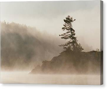 Windswept Pine IIi Canvas Print by Jon Butler