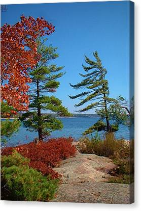 Windswept Point In Killbear Canvas Print
