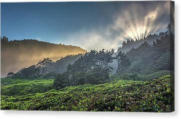 Canvas Print featuring the photograph Windswept Trees On The Oregon Coast by Pierre Leclerc Photography