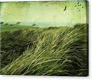 Canvas Print featuring the digital art Windy Day On The Nut by Margaret Hormann Bfa