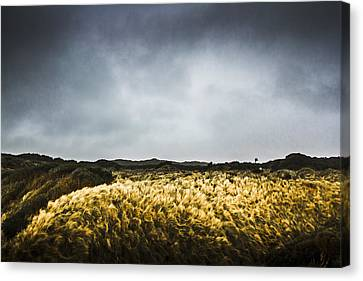 Windy Willow Canvas Print by Jorgo Photography - Wall Art Gallery