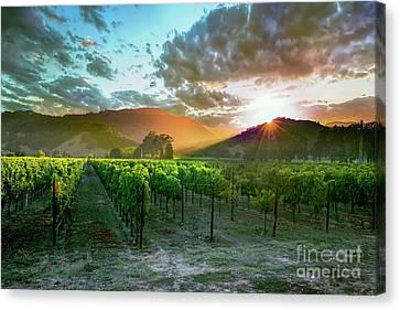 Grape Vines Canvas Print - Wine Country by Jon Neidert