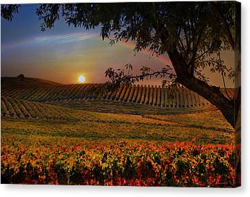 Wine Country Paradise Canvas Print