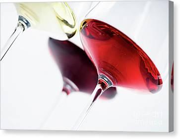Wine Glass Canvas Print by Jelena Jovanovic