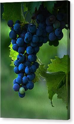 Wine Making Canvas Print - Wine Grapes by Ann Bridges