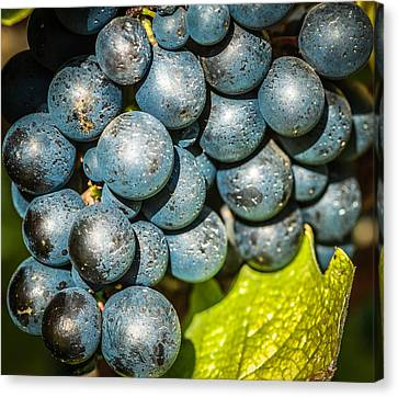 Wine Grapes Canvas Print by Optical Playground By MP Ray