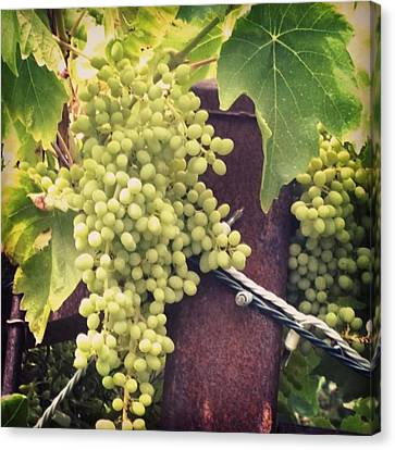 Food And Beverage Canvas Print - #wine On The #vine . Love These Little by Shari Warren