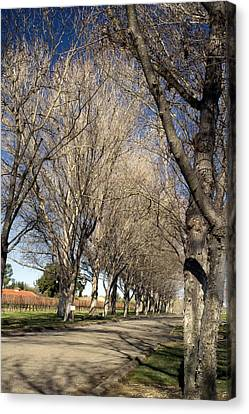 Winery Road Canvas Print by Gary Brandes