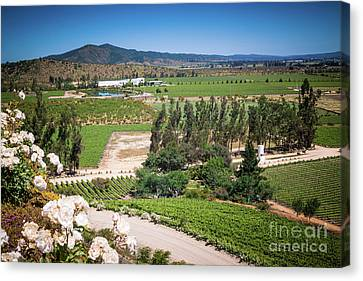 Vineyard View With Roses, Winery In Casablanca, Chile Canvas Print by Anna Soelberg