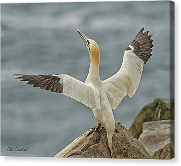 Wing Flap Canvas Print