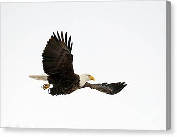 Wing To Wing Canvas Print