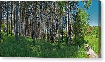 Wingate Prairie Veteran Acres Park Pines Crystal Lake Il Canvas Print