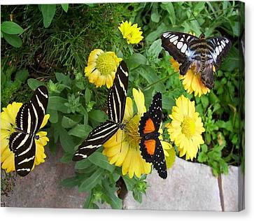 Canvas Print featuring the photograph Winged Beauties by Sandy Collier