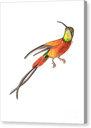Canvas Print featuring the painting Winged Jewel 6, Watercolor Tropical Rainforest Hummingbird Red, Yellow, Orange And Green by Audrey Jeanne Roberts