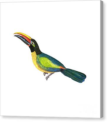 Canvas Print featuring the painting Winged Jewels 2, Watercolor Toucan Rainforest Birds by Audrey Jeanne Roberts