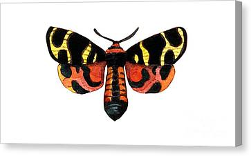 Canvas Print featuring the painting Winged Jewels 5, Watercolor Moth Black Yellow Orange And Red Tropical by Audrey Jeanne Roberts