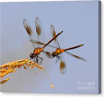 Wingman Canvas Print by Robert Frederick