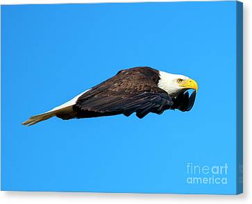 Wings Canvas Print by Mike Dawson