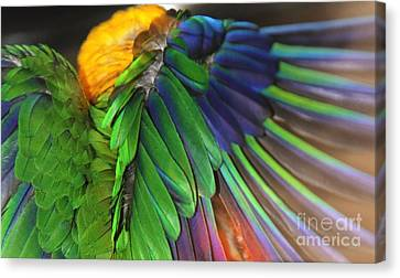 Wings Of A Conure Canvas Print by Andrea Lazar