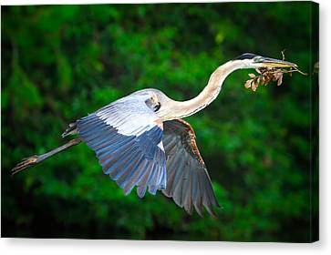 Wings Of Blue II Canvas Print by Mark Andrew Thomas