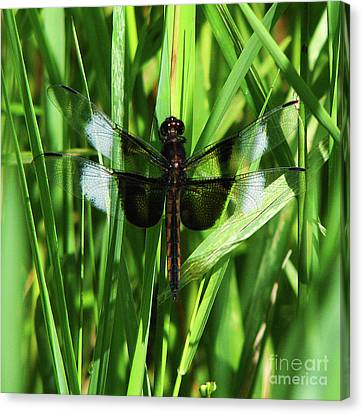 Canvas Print featuring the photograph Wings Of Note by Deborah Johnson