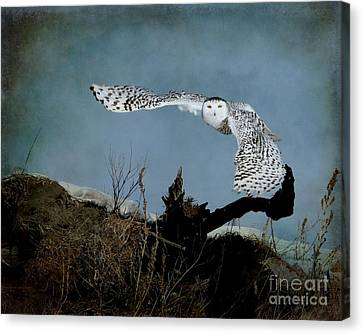 Wings Of Winter Canvas Print by Heather King