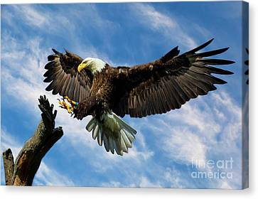 Wings Outstretched Canvas Print