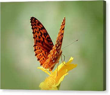 Wings Up - Butterfly Canvas Print