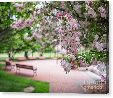 Winona Veterans Memorial With Blossoms Canvas Print by Kari Yearous
