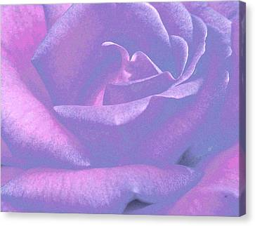 Winsome Rose 1 Canvas Print