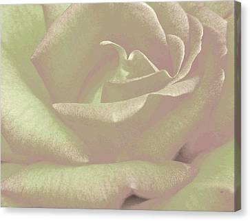 Winsome Rose 2 Canvas Print