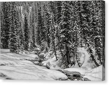 Winter Alpine Creek II Canvas Print