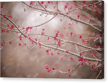 Canvas Print featuring the photograph Winter And Spring by Terry DeLuco