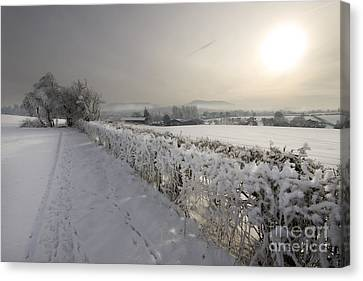 Winter Canvas Print by Angel  Tarantella