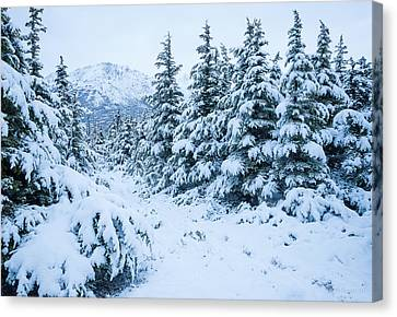 Canvas Print featuring the photograph Winter Arrives by Tim Newton