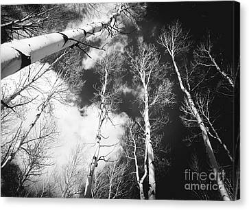 Canvas Print featuring the photograph Winter Aspens by The Forests Edge Photography - Diane Sandoval