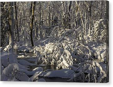 Winter At Borden Brook Canvas Print