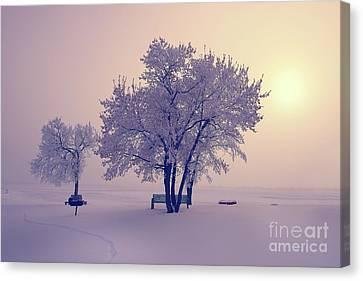 Winter Beauty  Canvas Print