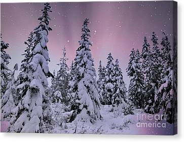 Winter Beauty Canvas Print by Sheila Ping