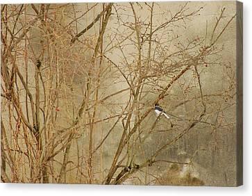 Winter Bird At The Audubon Canvas Print