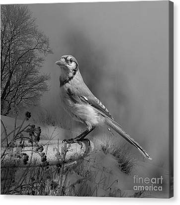 Winter Bird Canvas Print by Jan Piller