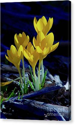 Winter Bloom Canvas Print by Sean Griffin