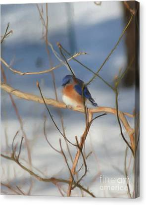 Canvas Print featuring the painting Winter Bluebird Art by Smilin Eyes  Treasures