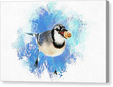 Canvas Print featuring the photograph Winter Bluejay by Darren Fisher