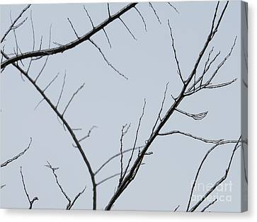 Winter Branches Canvas Print by Craig Walters